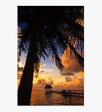 Coconut Tree in Belize Photographic Print