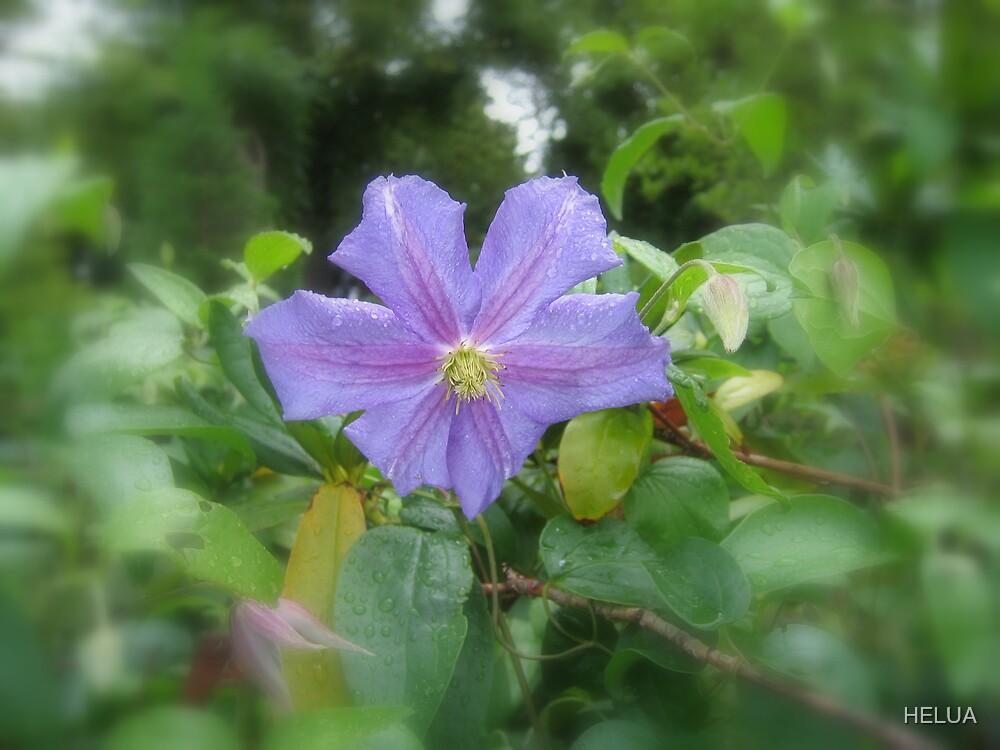 Enchanted Garden - Purple Flower by HELUA