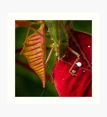 Territorial grasshopper Kunstdruck