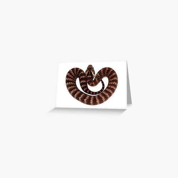 Common Death Adder (Acanthophis antarcticus) Greeting Card