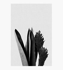 Tropical Flower Black & White Photographic Print