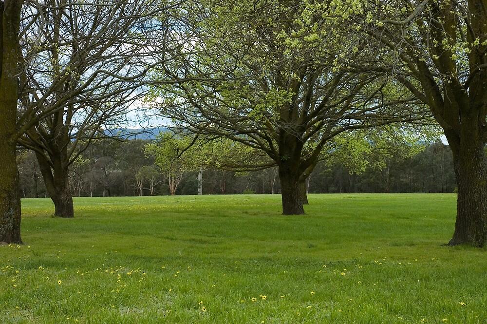 Jells Park by Roger Olasiman