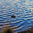 Stone Ripple by Barry W  King