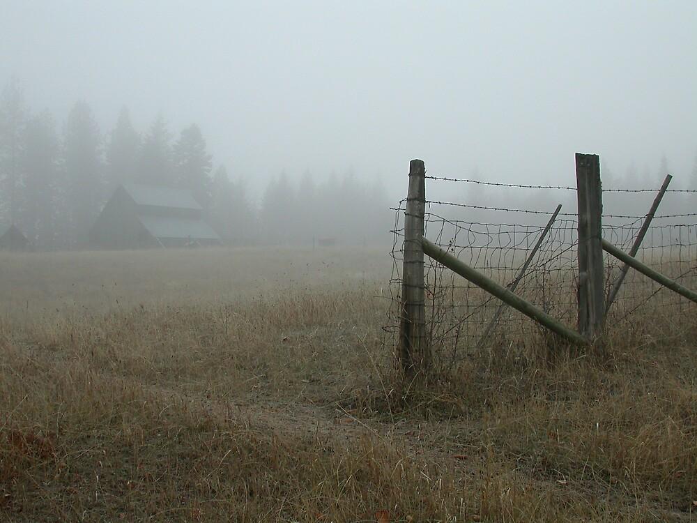 Misty Meadow by dougf