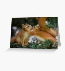 Baby Squirrel Kiss Greeting Card