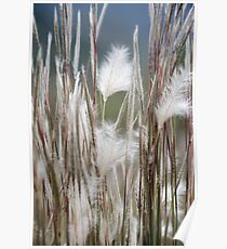Feathery Field Poster