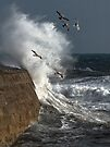 Storm and Seagulls by SWEEPER