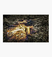 Forest Stream Photographic Print