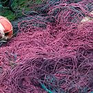 Purple Nets by marycarr