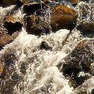 River bank by Alojzy