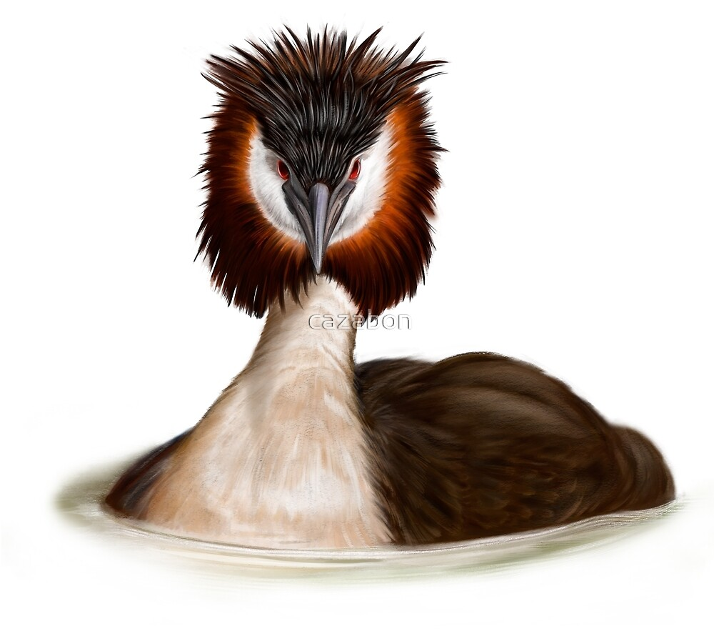 Great Crested Grebe by cazabon