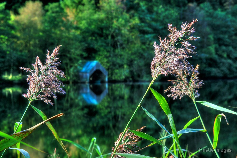 Loch Ard Grass by Thistle Images