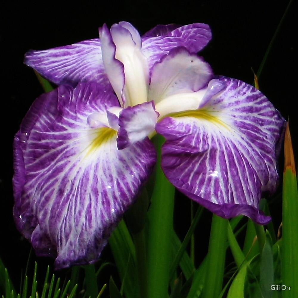 Purple by Gili Orr