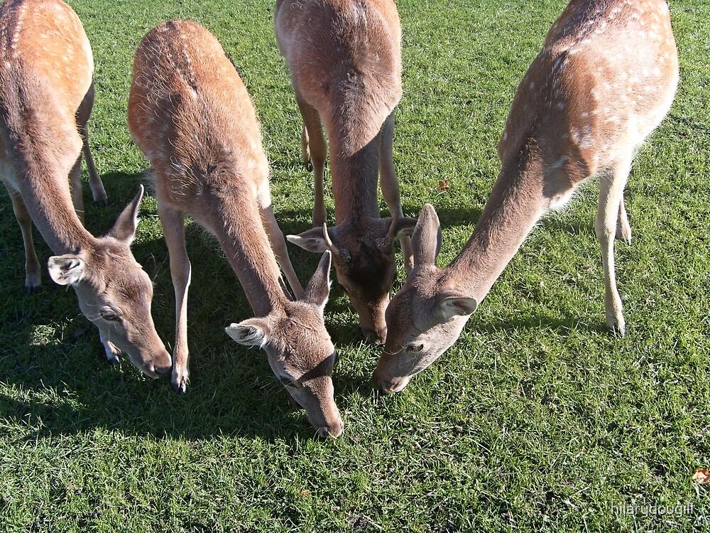 Deer sharing food by hilarydougill