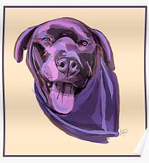 Kona Dog Poster