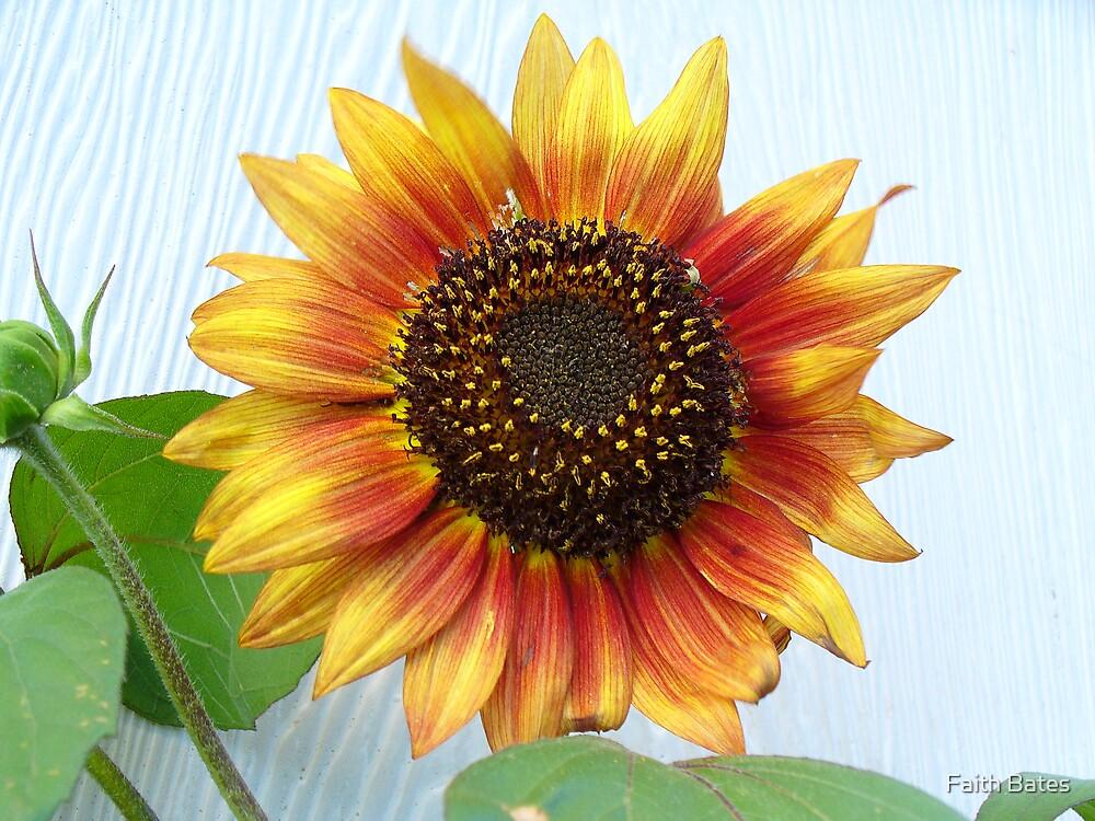 Sunflower Beauty by Faith Bates