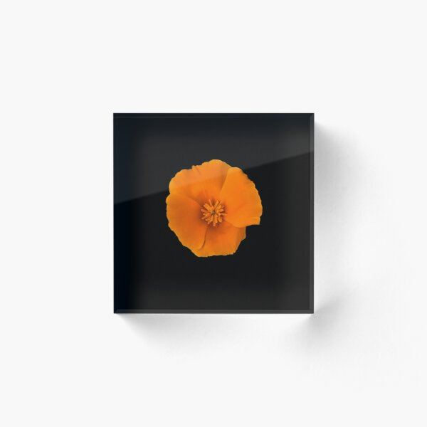 Golden Poppy Flower Acrylic Block
