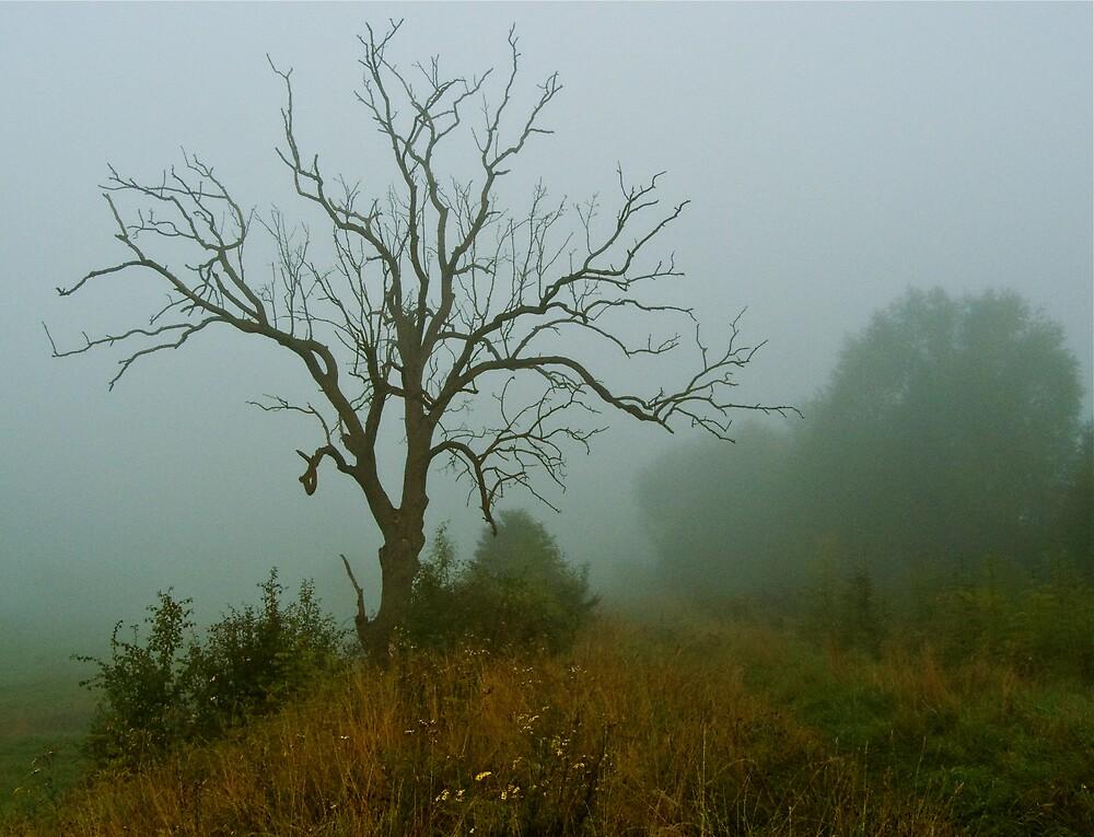 Foggy morning by George Swann