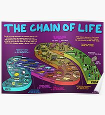 The Chain of Life - Your Evolutionary History Poster