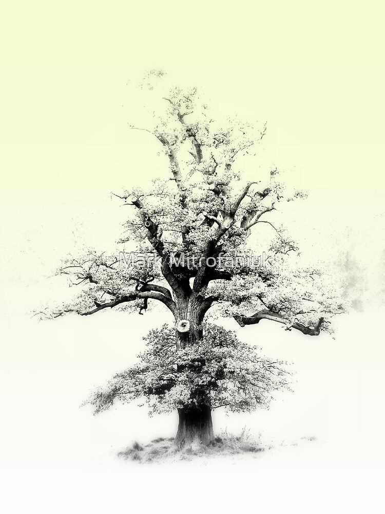 Story Book Tree by Mark Mitrofaniuk