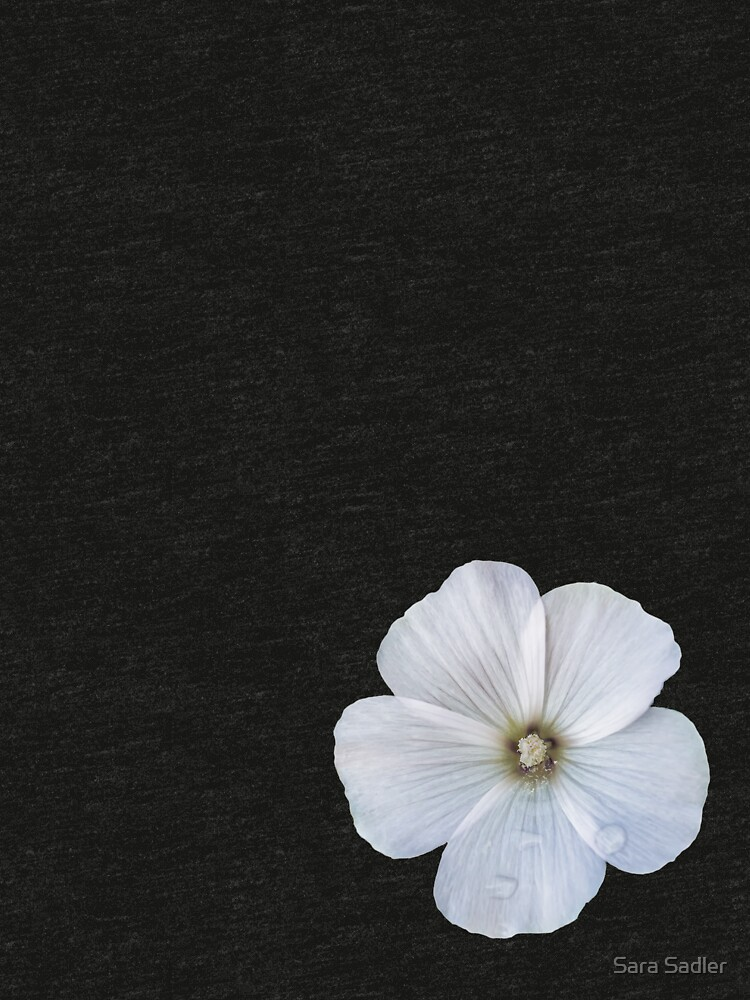 White hibiscus flower by sadler2121