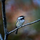 September chickadee contemplates December by Normcar
