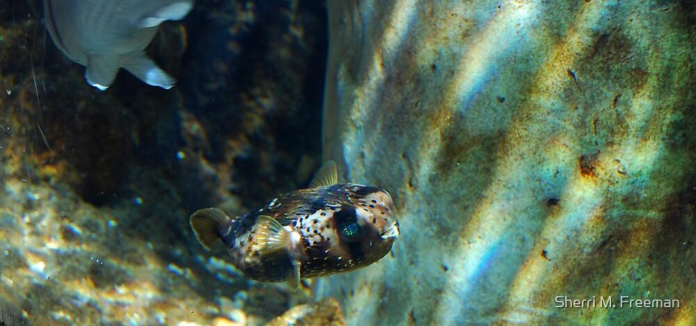 Pufferfish by Sherri M. Freeman