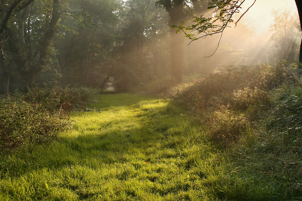 The first signs of autumn by Graham Ettridge