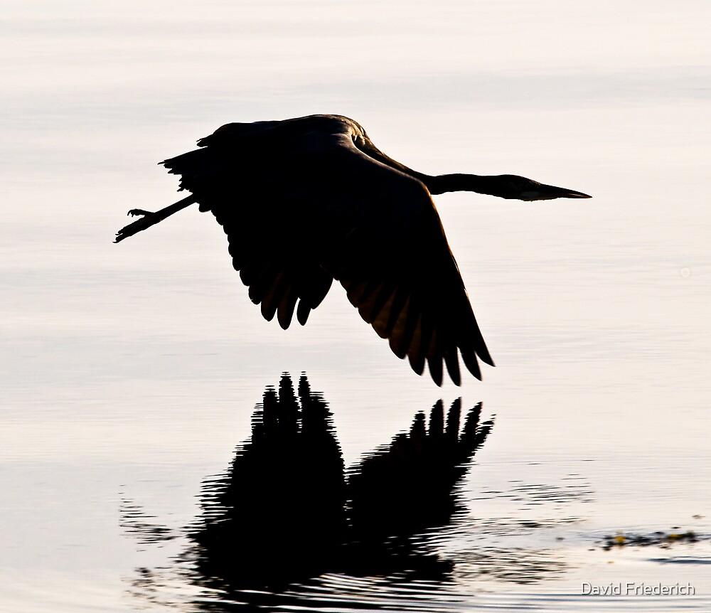 Great Blue Heron in Early Light by David Friederich