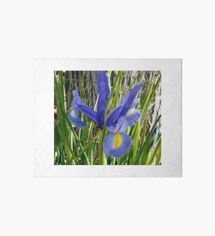 Japanese Iris Art Board