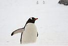 """Gentoo Penguin ~ """"You Lost Too""""  by Robert Elliott"""