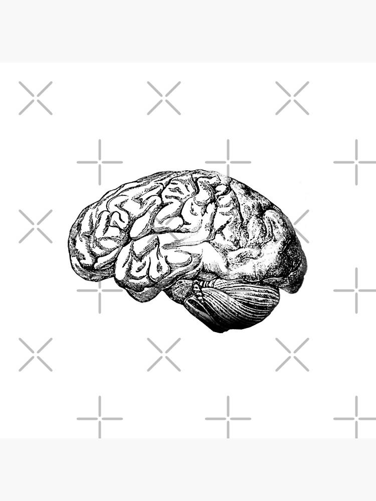 Anatomie des Gehirns von StilleSkygger