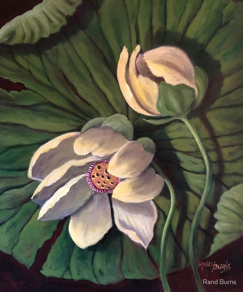Waterlily Like A Clock by Randy Burns