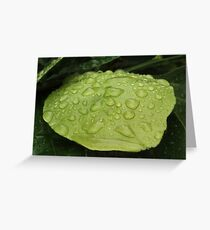 rain drops on a green leaf Greeting Card