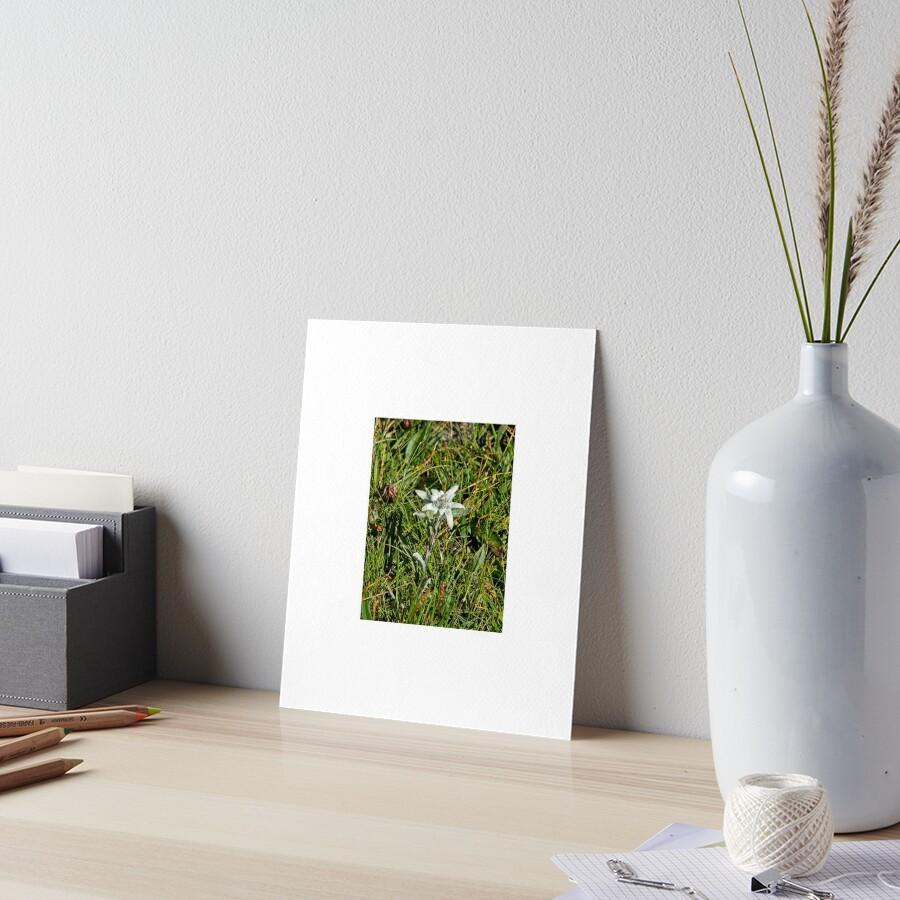 Edelweiss Art Board Print