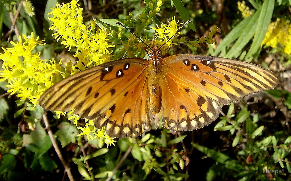 Butterfly on Goldenrod Plant by librapat