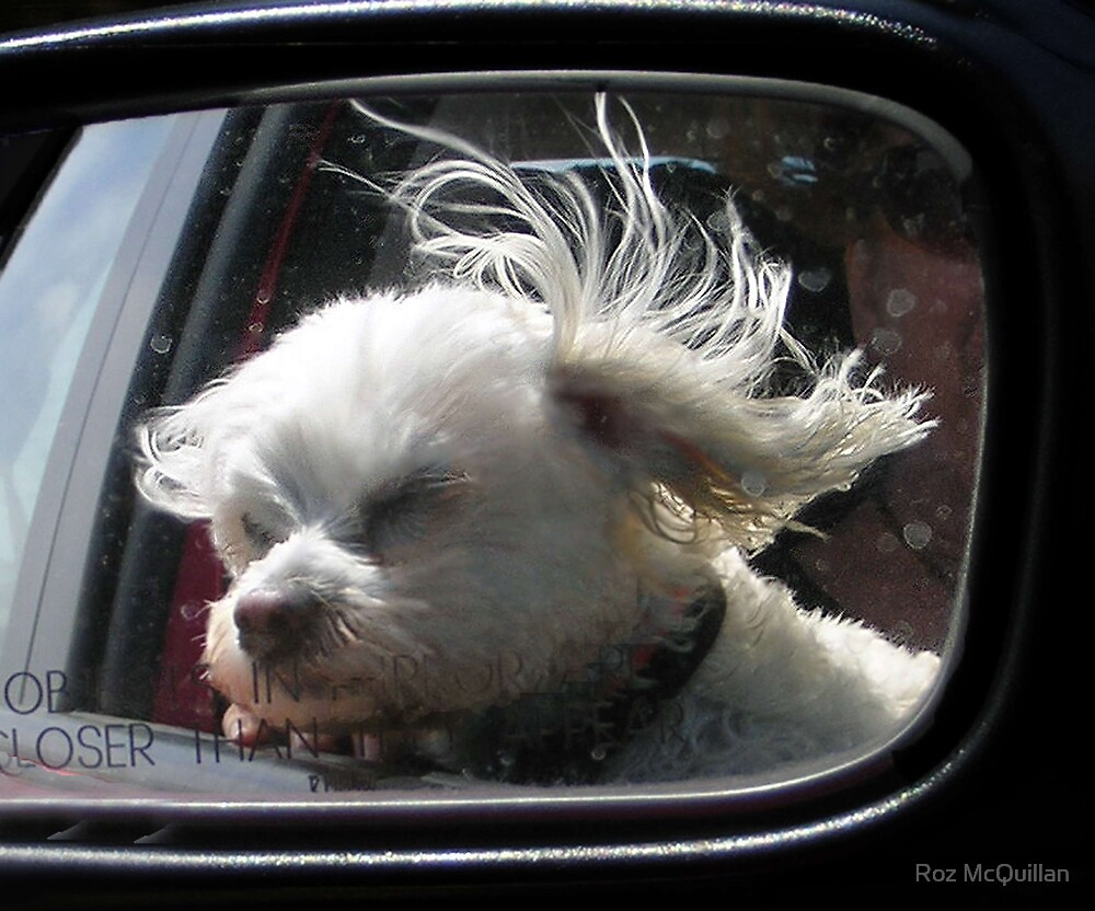 Oooh, how I love the wind and rain in my hair... by Roz McQuillan