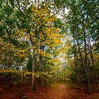 October Forest (2) by LudaNayvelt
