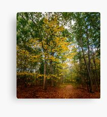 October Forest (2) Canvas Print