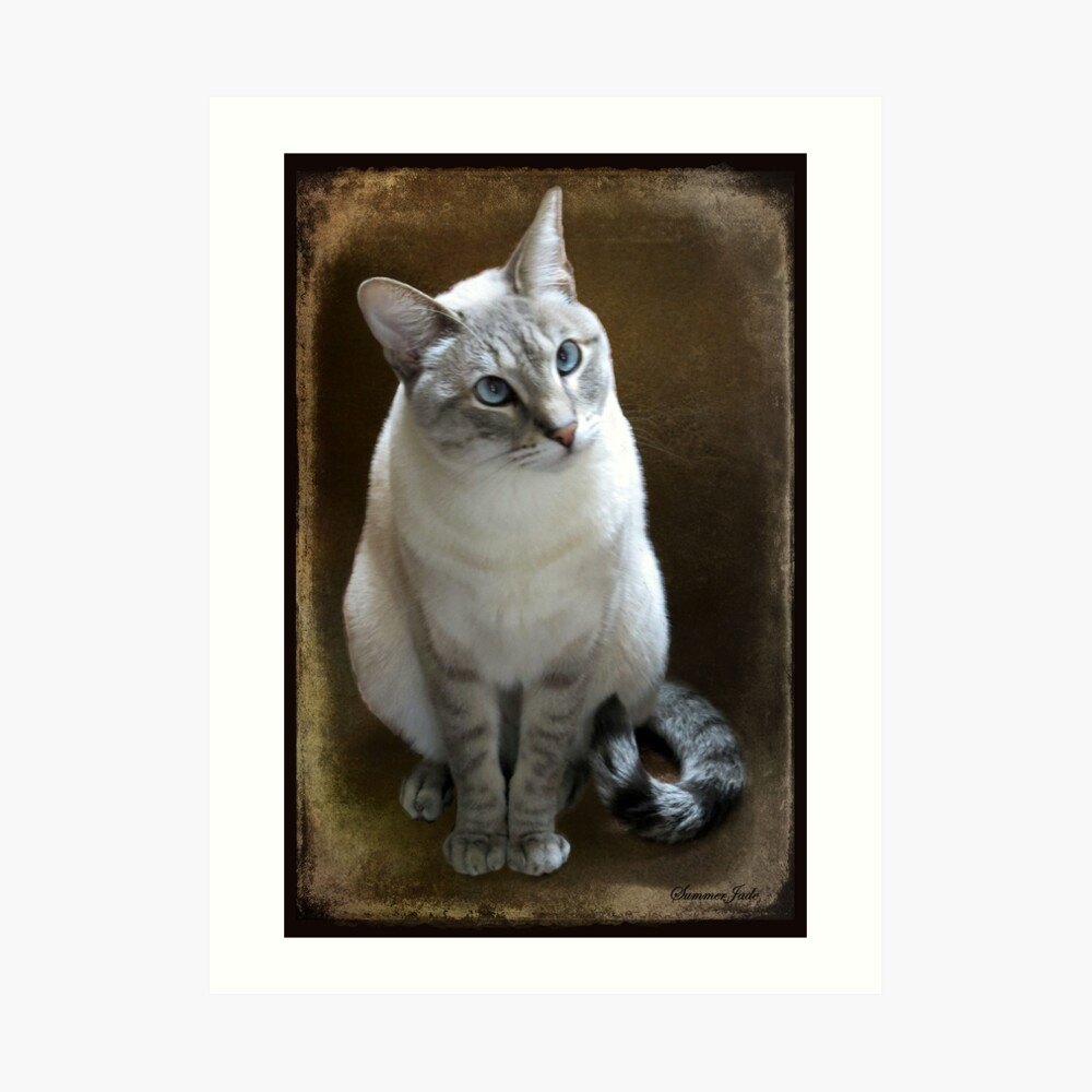 Lilac Point Siamese ~ Old Blue Eyes Art Print