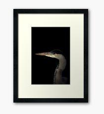 Grey Heron portrait  Framed Print