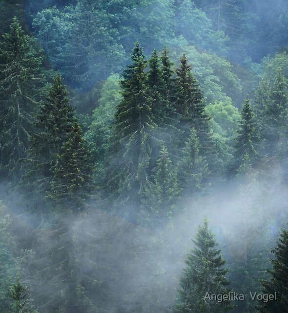 The Fir Forest...French Alps by Angelika  Vogel