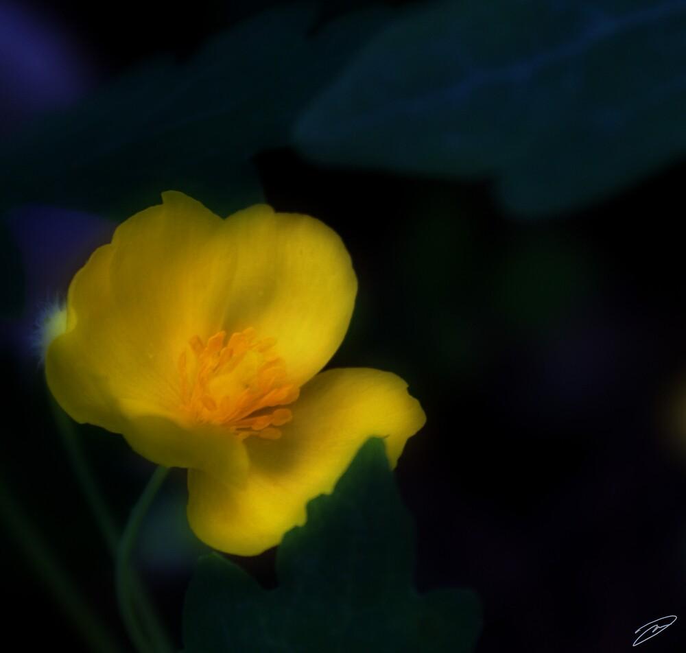 Shy Bloom by David W Kirk