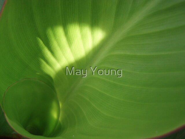 Swirl by May Young