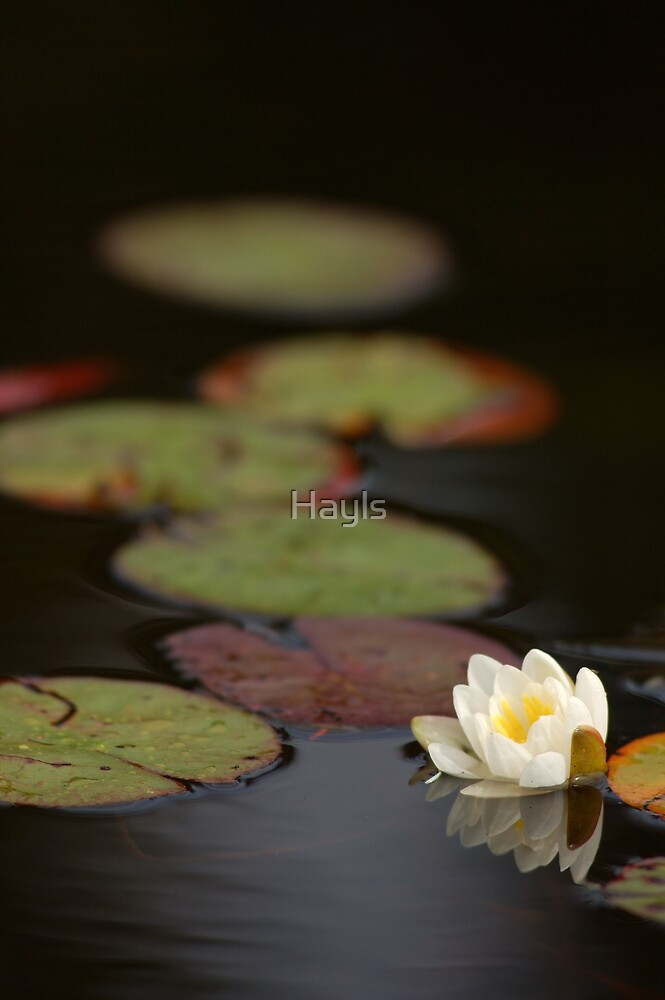 pond by Hayls