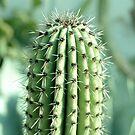 Kaktus-Fotografie von VanGalt