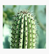 cactus photography Photographic Print