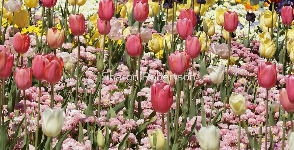 Pastel Tulips by Sharon Robertson