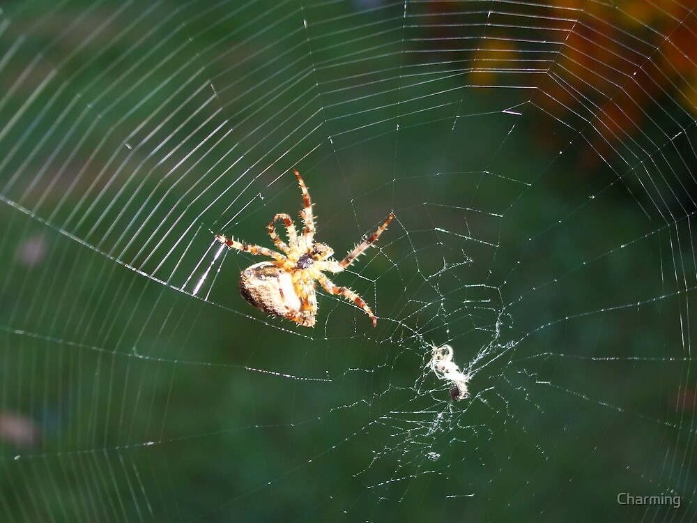 Orb Web Spider by Charming