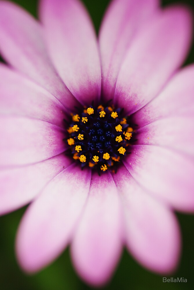 Daisy by BellaMia